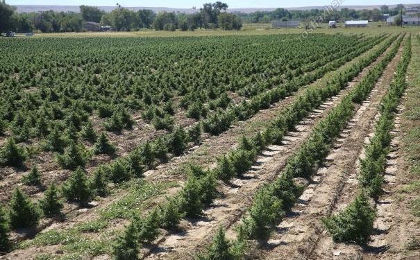 Агротехника конопли экстази с марихуаной