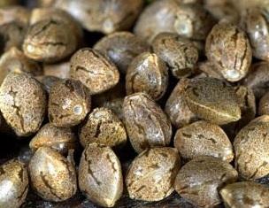 Загадки конопля заказать купить семя марихуаны